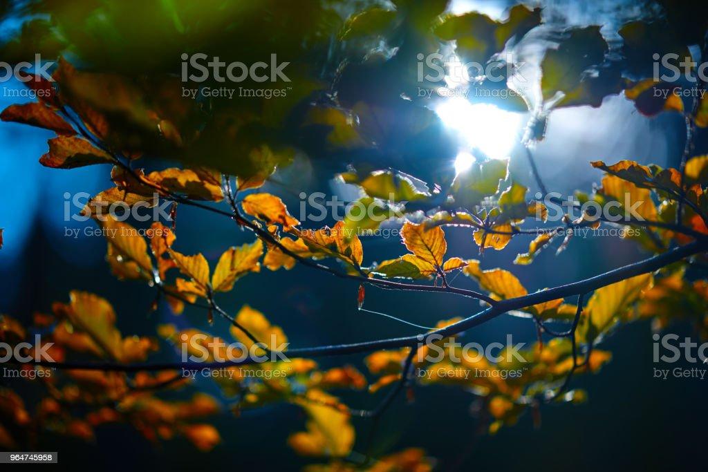 amazing autumn shot royalty-free stock photo