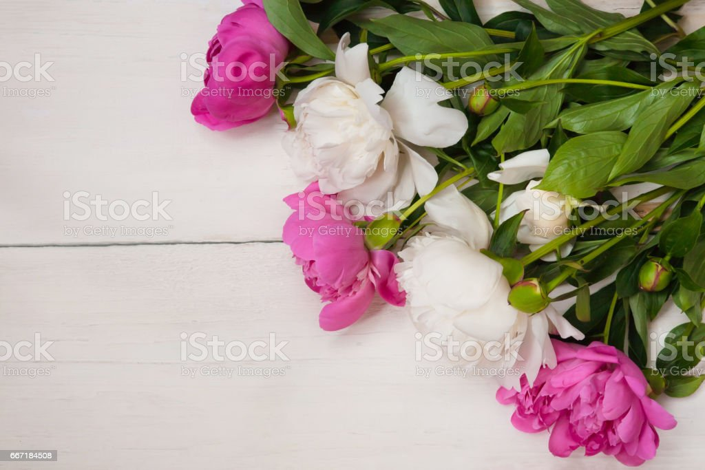 Amazing background with white and pink peonies flowers stock photo amazing background with white and pink peonies flowers royalty free stock photo mightylinksfo