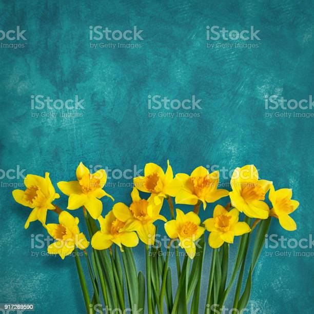 Amazing background with yellow flowers daffodils picture id917269590?b=1&k=6&m=917269590&s=612x612&h=aqidqml0somr2s5fqjugijvx 6ayywlbzs9aygkqvo8=