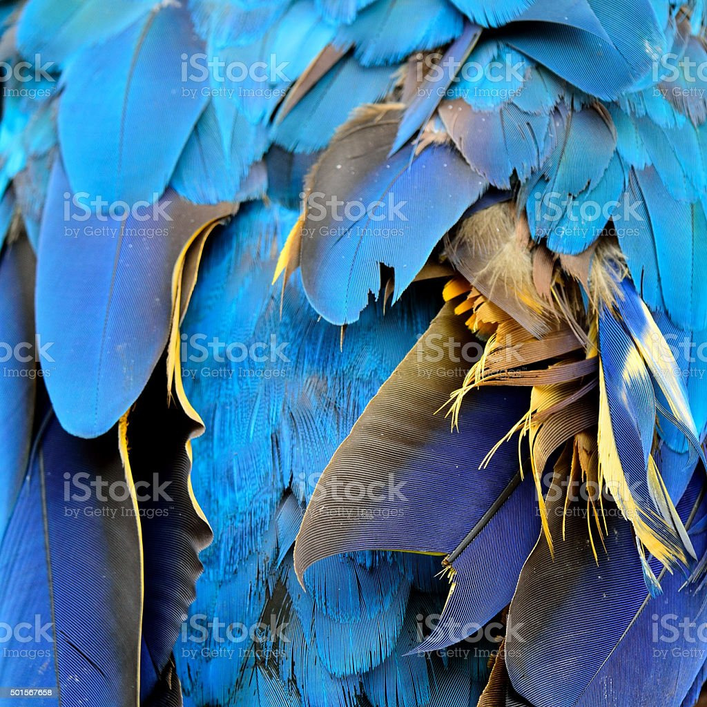 Amazing blue background texture capture from the blue and gold stock photo