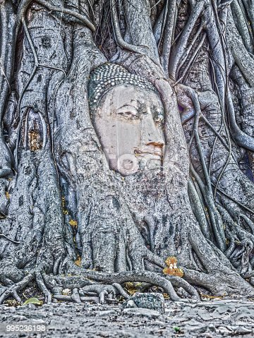 Amazing Buddha Head embraced by banyan tree roots in Mahathat temple Ayutthaya province Thailand