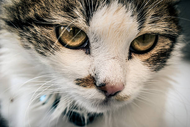 Amazing Cat 2 cat 1 grafiker stock pictures, royalty-free photos & images