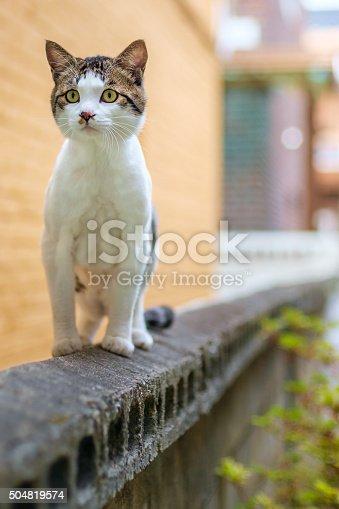 543560840 istock photo Amazing cat 504819574