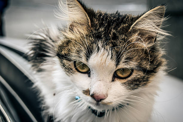 Amazing Cat Happy Cat grafiker stock pictures, royalty-free photos & images