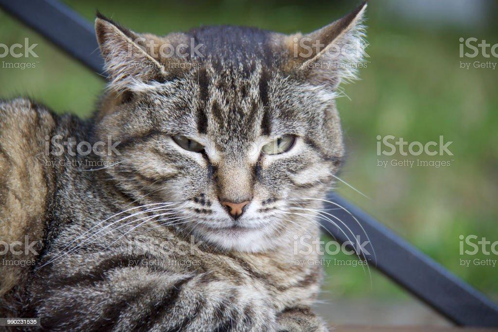 Amazing cat стоковое фото