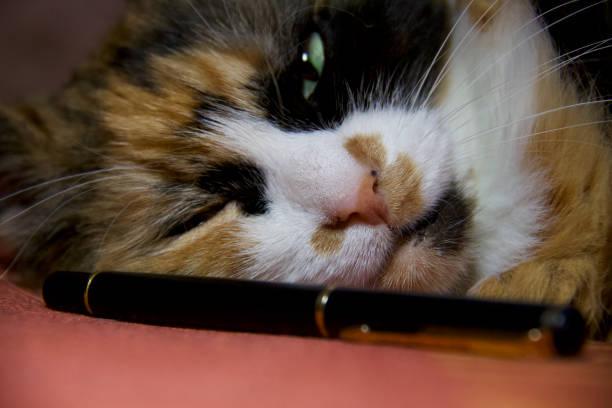 Cтоковое фото Amazing cat