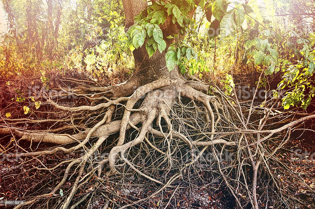 Amazing Chaos Tree Roots stock photo