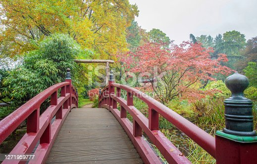 Amazing colorful autumn in japanese garden in Leverkusen. Red bridge  and red and yellow colors of leaves ( japanese maple)