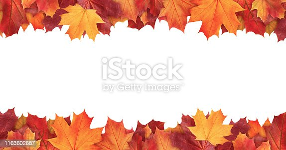 istock Amazing colorful background of autumn maple tree leaves background with white empty space. Multicolor maple leaves autumn background. High quality resolution picture 1163602687