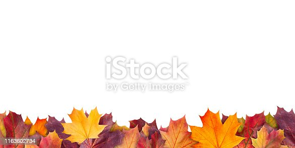 istock Amazing colorful background of autumn maple tree leaves background with white empty space. Multicolor maple leaves autumn background. High quality resolution picture 1163602734