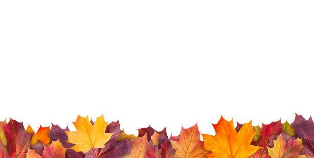 amazing colorful background of autumn maple tree leaves background with white empty space. multicolor maple leaves autumn background. high quality resolution picture - autumn foto e immagini stock