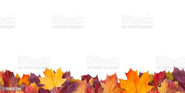 Photo of Amazing colorful background of autumn maple tree leaves background with white empty space. Multicolor maple leaves autumn background. High quality resolution picture