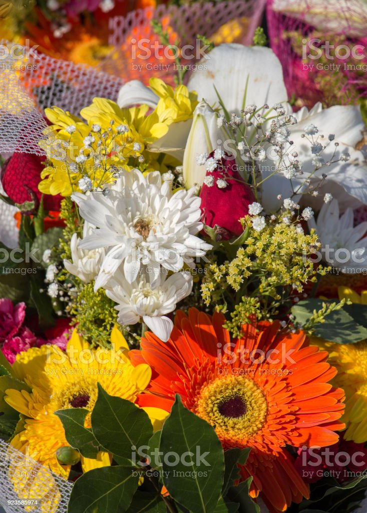Amazing colorful Spring flowers in nature stock photo