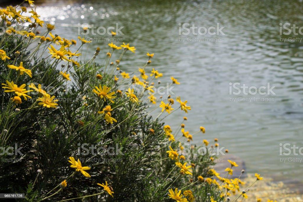 Prachtige kleurrijke Lentebloemen in de natuur - Royalty-free Abstract Stockfoto