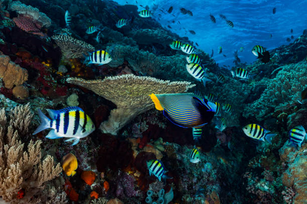 Amazing Coral Reef, Tropical Paradise, Komodo National Park, Indonesia stock photo