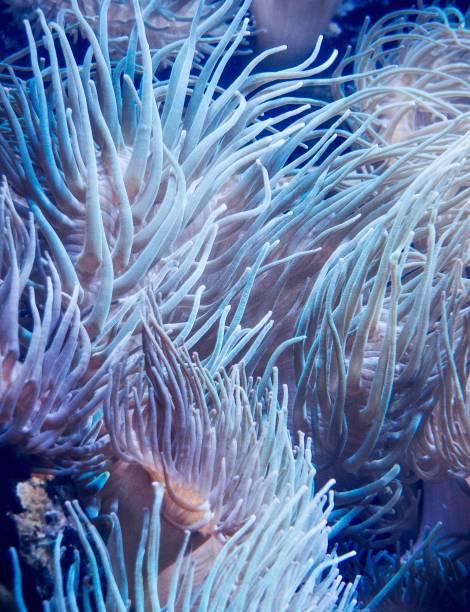 erstaunliche korallenriffe in unterwasserwelt - coral and mauve stock-fotos und bilder