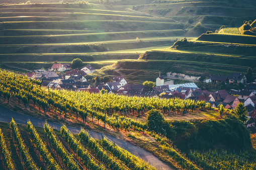 Amazing countryside landscape with a historic village, traditional houses and vineyards on terraces. Kaiserstuhl, Germany, Black Forest.