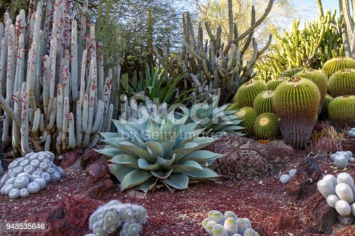 Amazing desert cactus garden with multiple types of cactus in the spring or summer.