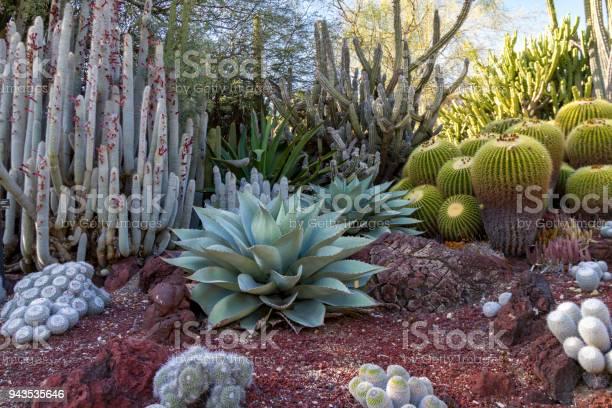 Photo of Amazing desert cactus garden with multiple types of cactus