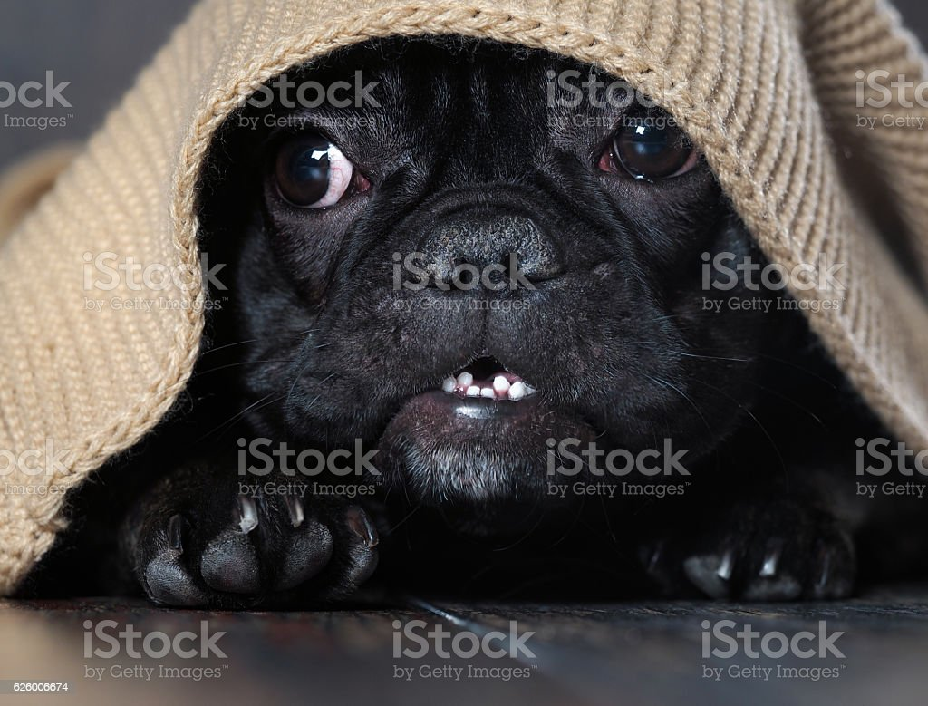 Amazing dog face stock photo