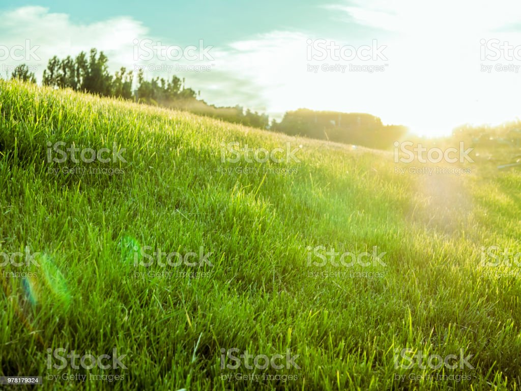 amazing dreamy summer green field with grass lawn against the sun stock photo