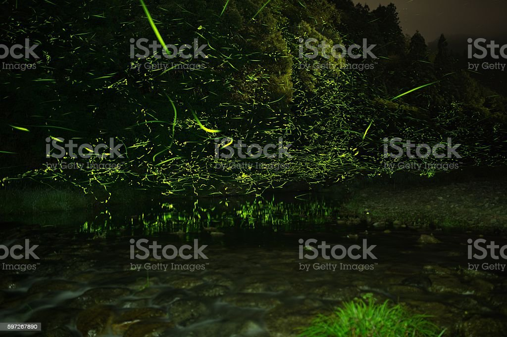 amazing firefly royalty-free stock photo