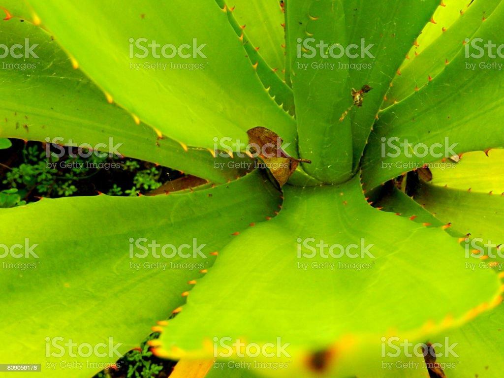 Amazing Forest stock photo