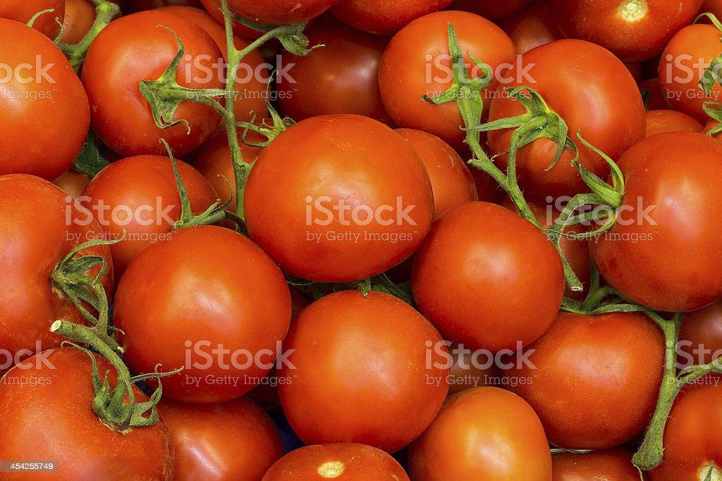 Amazing Fresh Ripe Red Tomatoes on Vine royalty-free stock photo