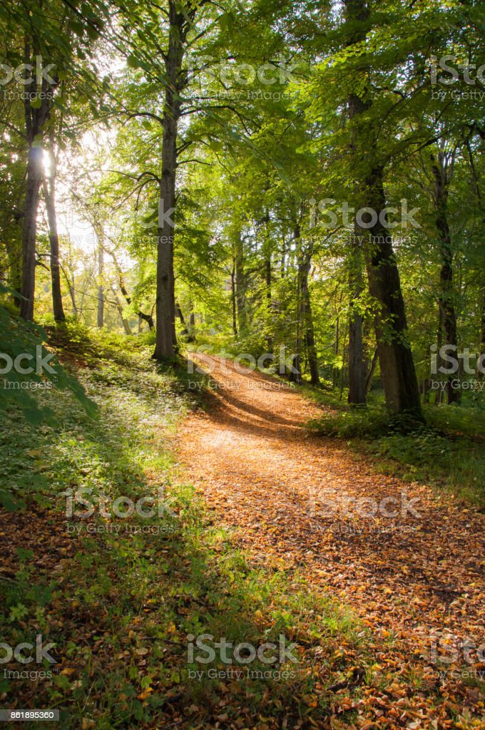 Amazing golden sunlight coming through trees and lightening up an autumn forest path stock photo