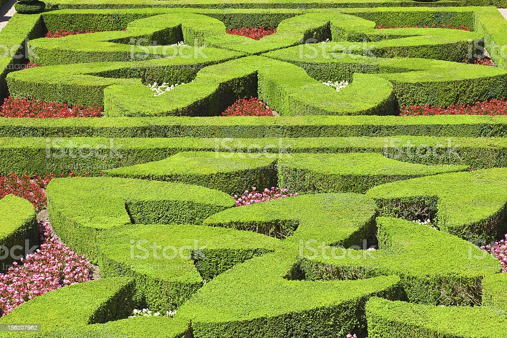 Heart shaped hedges from Villandry chateau, France. EOS 5D Mark II