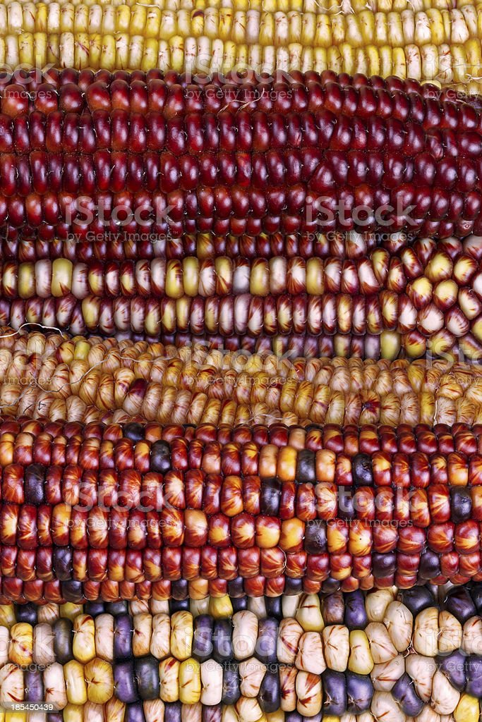 Amazing Indian Maize royalty-free stock photo