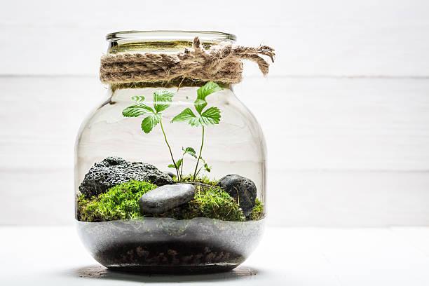 amazing jar with piece of forest as new life concept - terrarienpflanzen stock-fotos und bilder