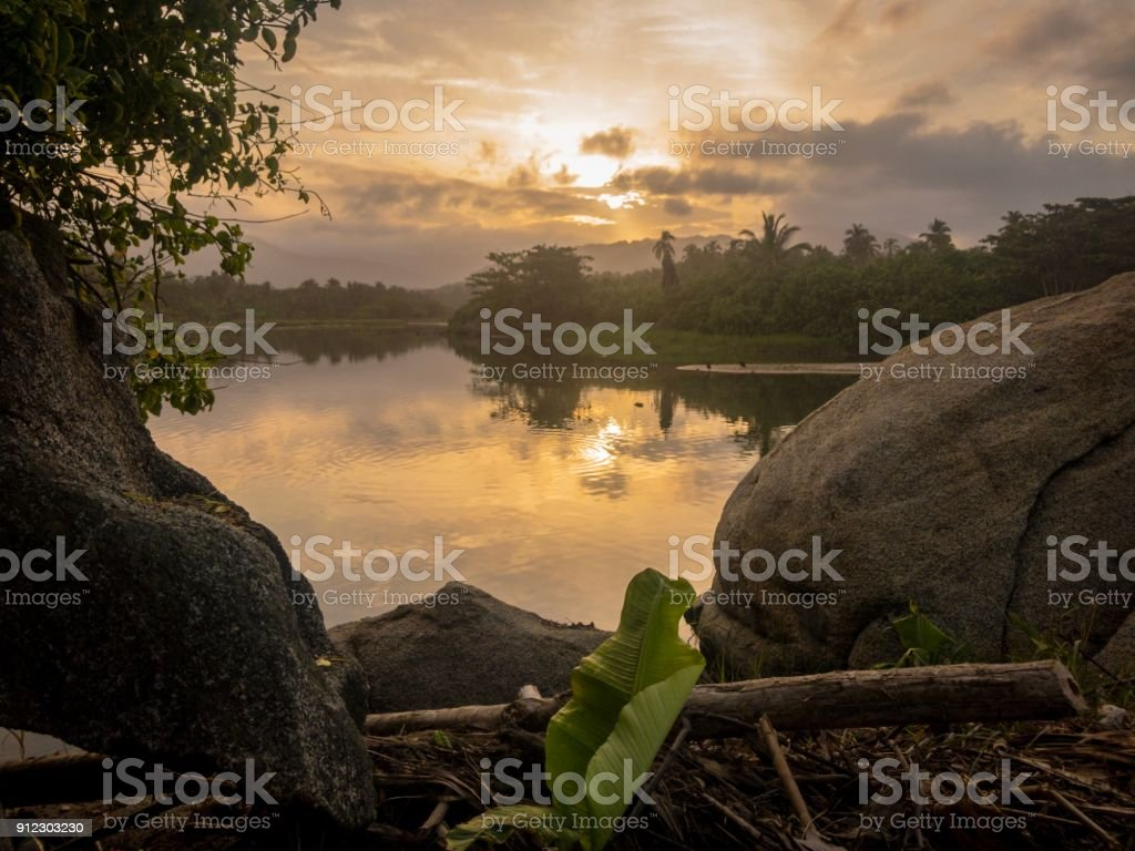 Amazing jungle stock photo
