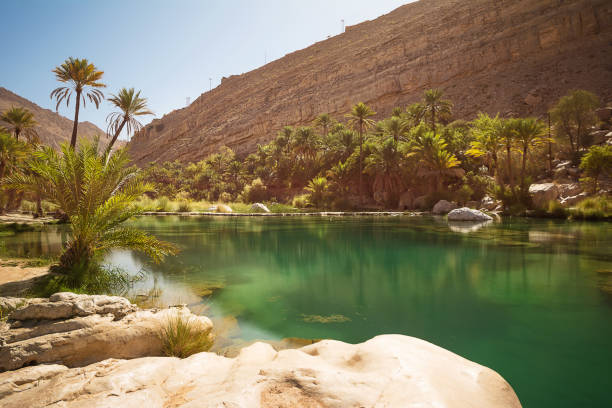 amazing lake and oasis with palm trees (wadi bani khalid) in the omani desert - oman zdjęcia i obrazy z banku zdjęć