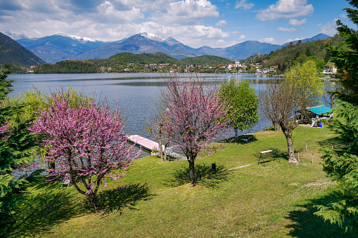 Amazing landscape with colorful cherry trees on the shores of Lago Grande, Avigliana, Piedmont, Italy