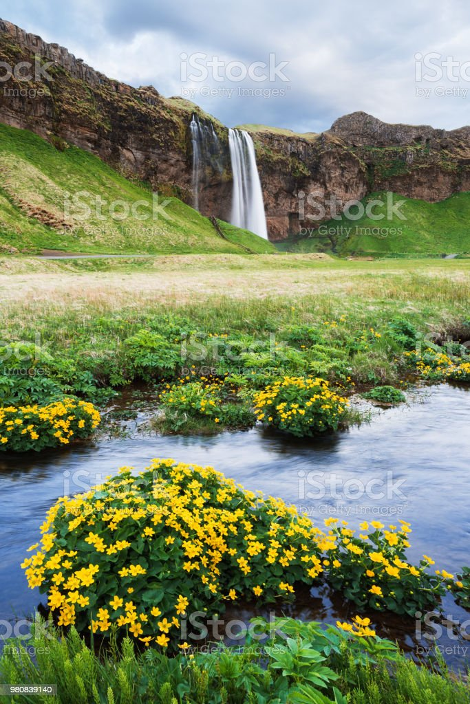 Seljalandsfoss waterfall. Summer landscape with a river. flowers in...