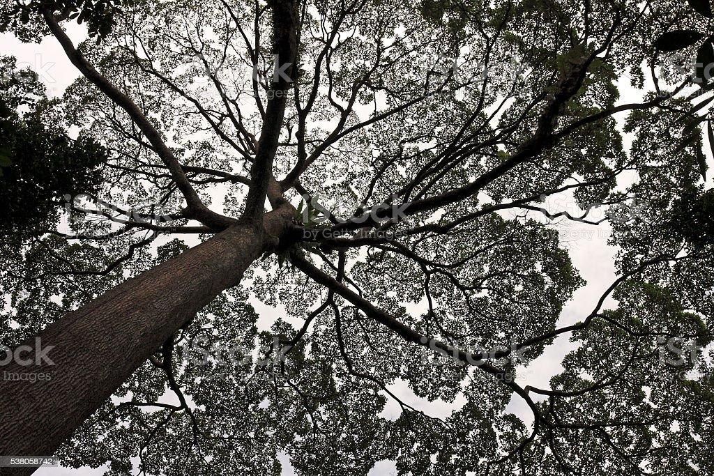 Amazing Leafy Treetop Silhouette stock photo