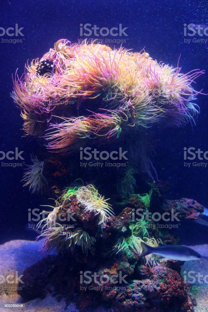 Amazing marine animals closeup in aquarium stock photo