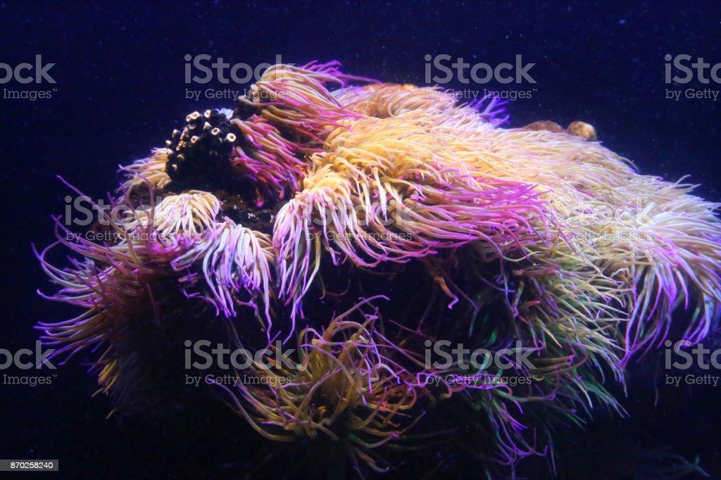 Amazing marine animals close-up stock photo