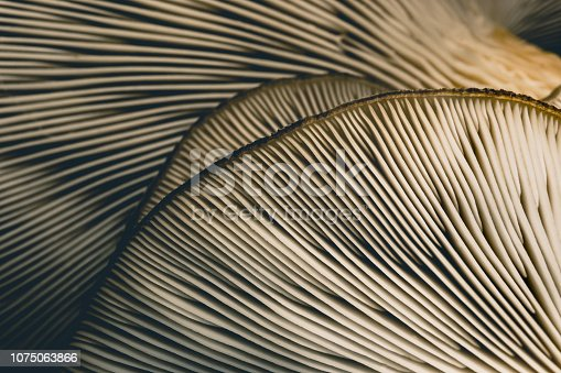Backgrounds, Texture, Mushroom, Macrophotography, Design, Nature, Wildlife