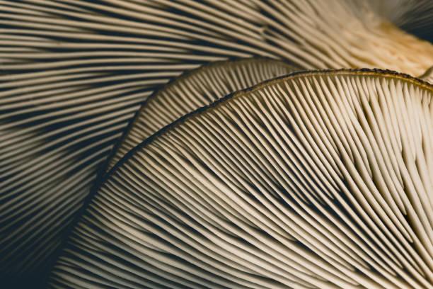 amazing mushroom background and texture. close up shot. - cogumelos imagens e fotografias de stock