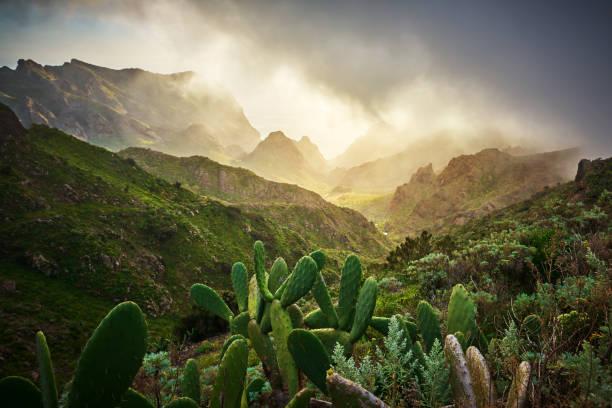 amazing nature in Teno mountain valley stock photo