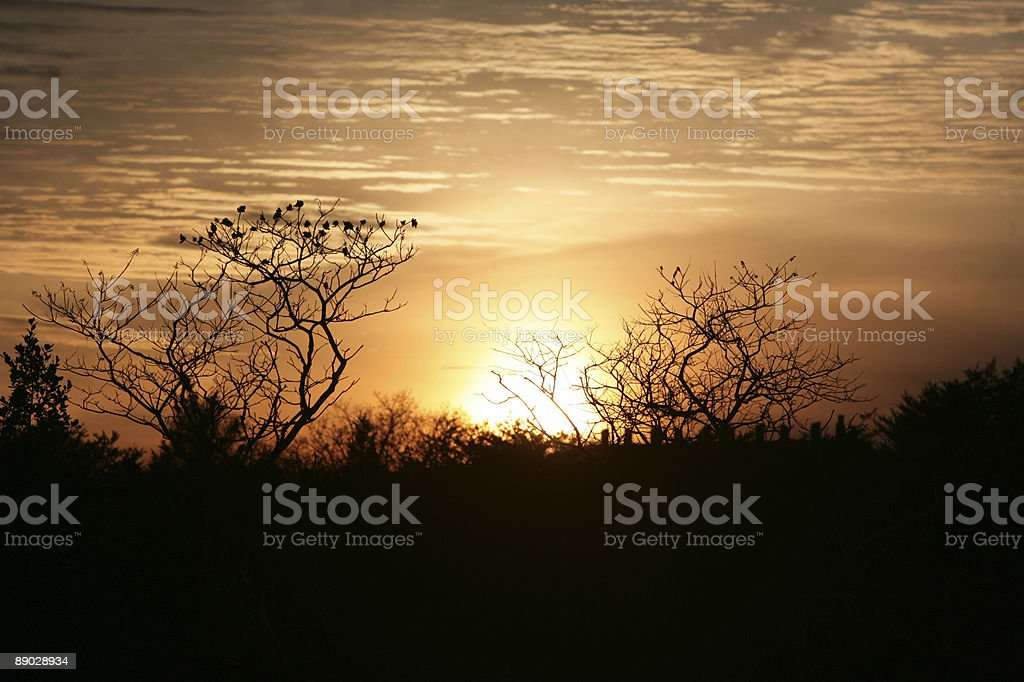 Amazing Nature 免版稅 stock photo