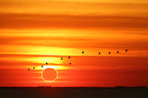 amazing phenomenon of partial sun eclipse over silhouette birds flying on sea and sunset sky stock photo