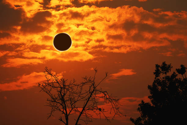amazing phenomenon of total sun eclipse over silhouette cactus and desert tree sunset sky stock photo