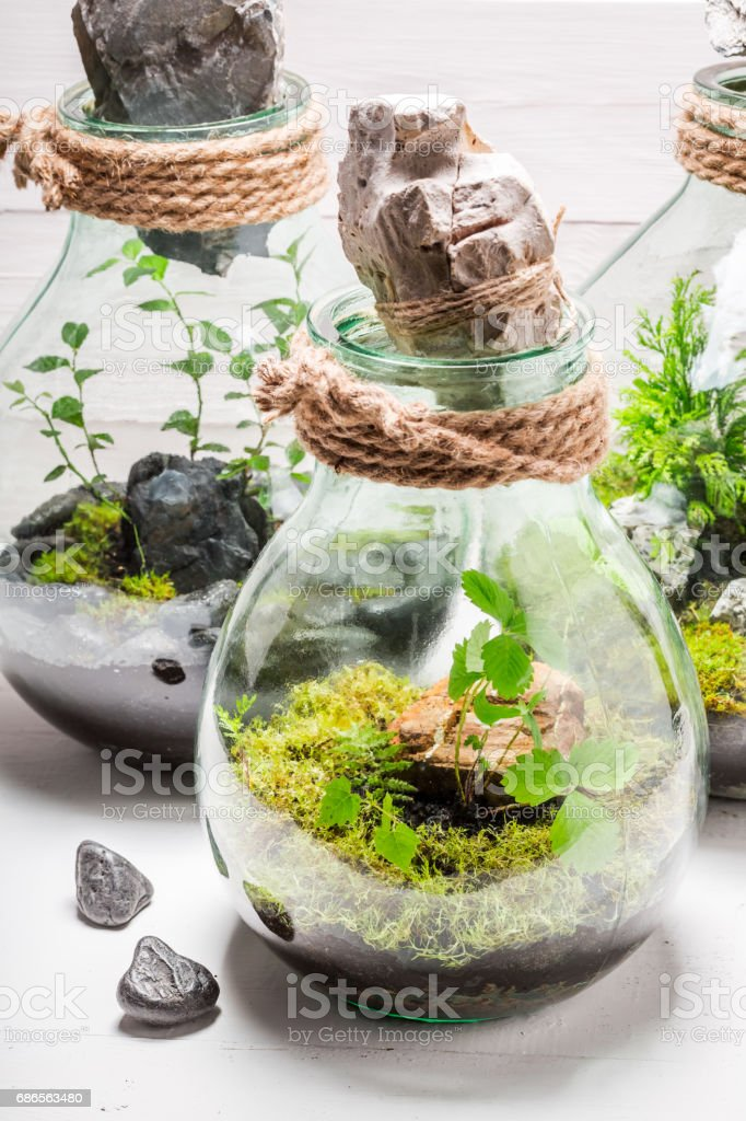 Amazing rain forest in a jar on white table foto stock royalty-free