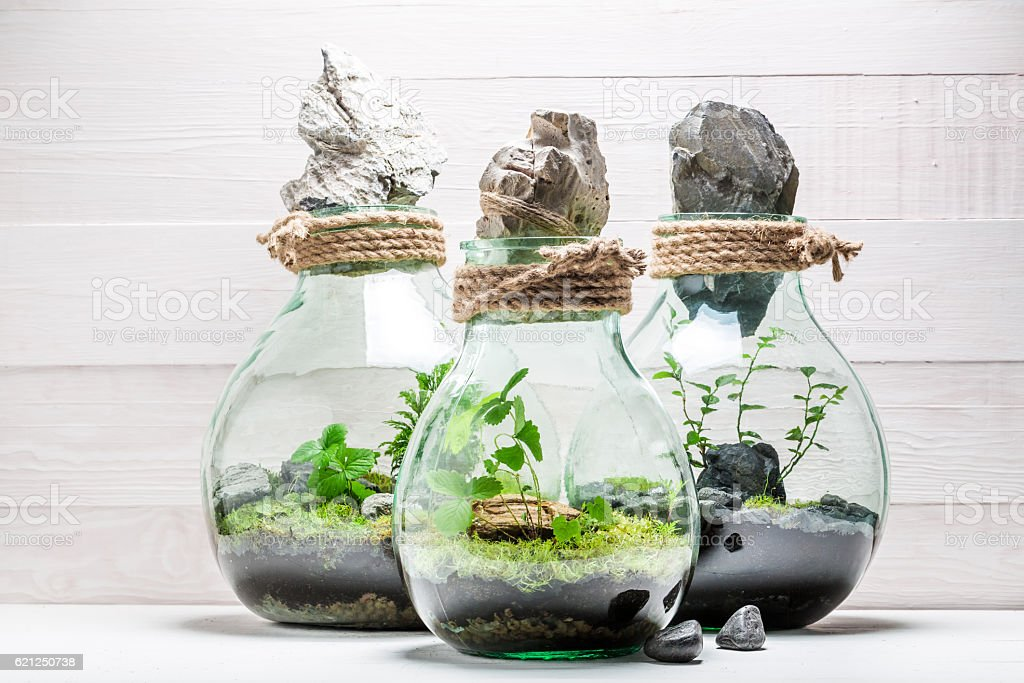 Amazing rain forest in a jar, save the earth concept stock photo
