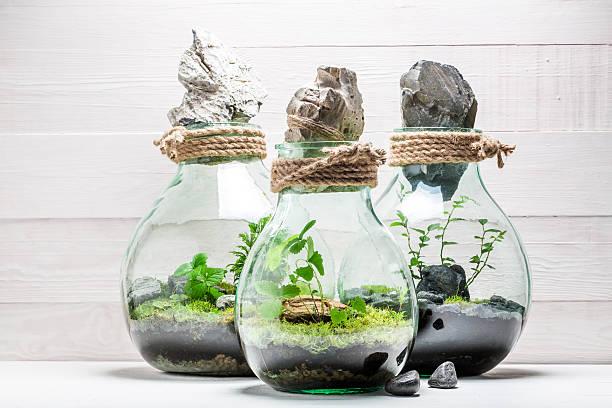 amazing rain forest in a jar, save the earth concept - terrarienpflanzen stock-fotos und bilder