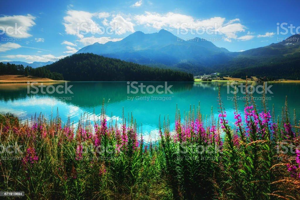 Amazing sunny day stock photo