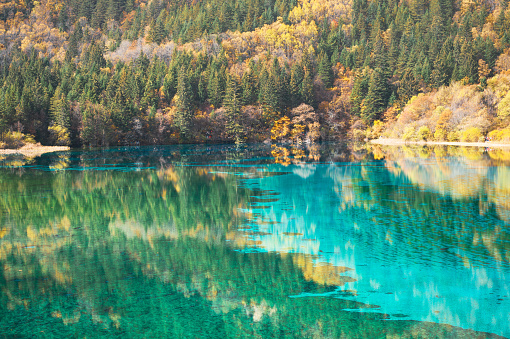 Amazing sunny landscape with azure river among mountains and woods in fall, Jiuzhaigou nature reserve (Jiuzhai Valley National Park), China. Beautiful view of crystal clear water and autumn forest.